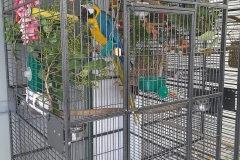 Extra Large Cage