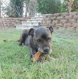 Home Visit - Dog