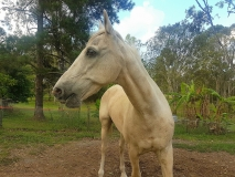 Home Visit - Horse