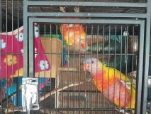 Home Visit - Birds