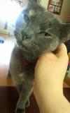 Home Visit - Cat
