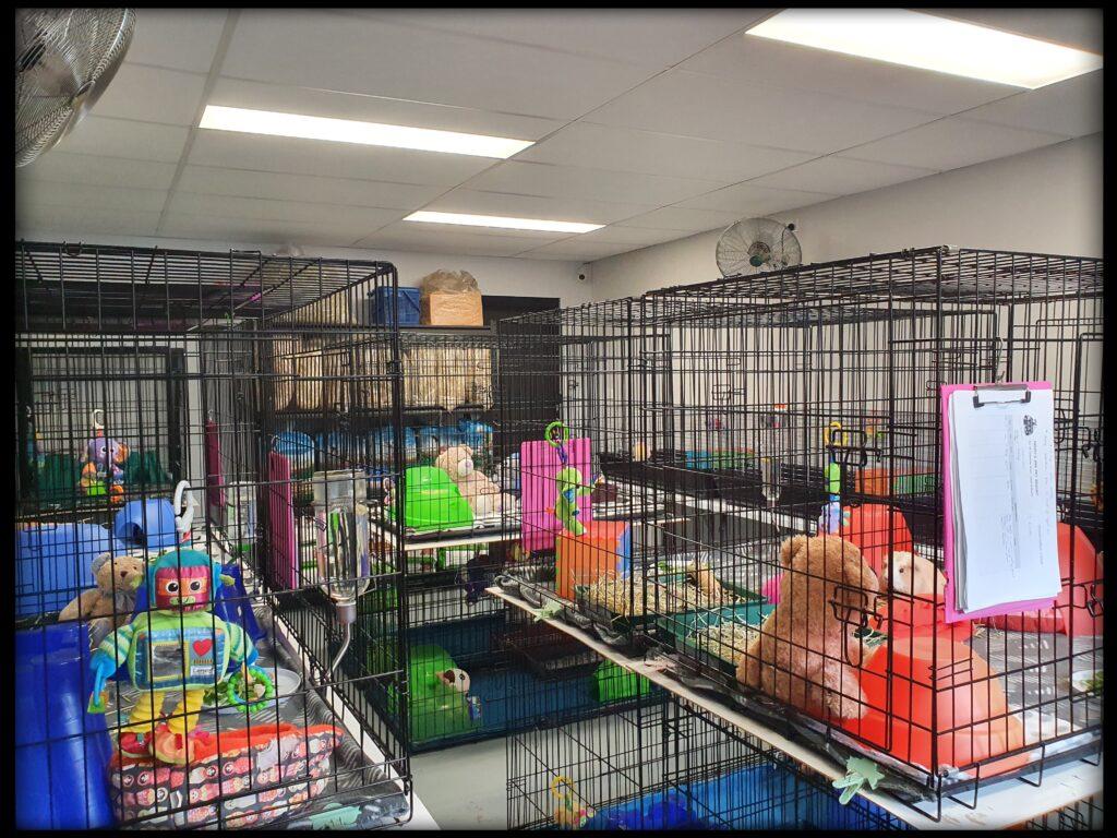 Guinea Pig Room